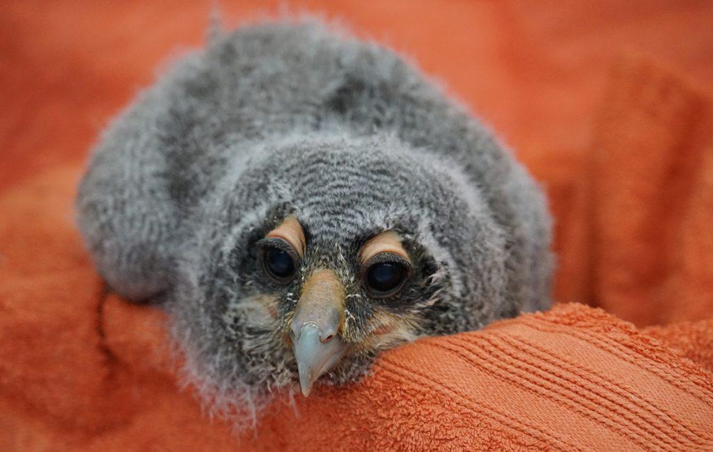 Babyboom im Weltvogelpark: Nachwuchs in vielen Nestern