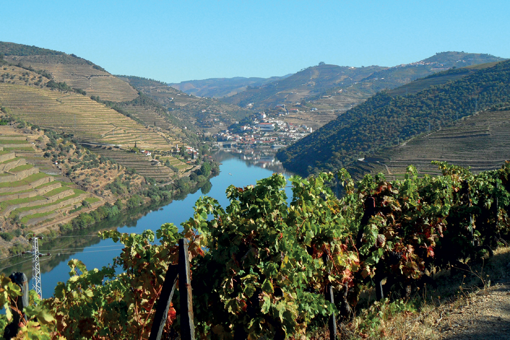 Durch ein Tal führender Fluß. Im Vordergrund Weinstöcke.