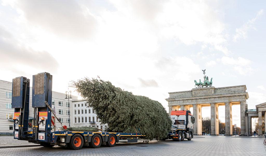 transporter fährt Tannenbaum zum Brandenburger Tor