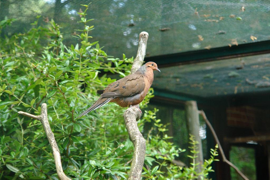 Weltvogelpark Walsrode gibt Tipps für den Artenschutz im heimischen Garten