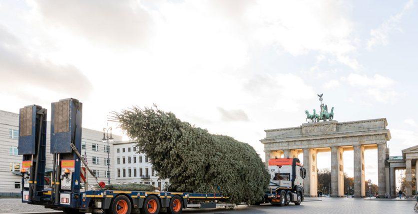 Universal Transport liefert Weihnachtsbaum für das Brandenburger Tor